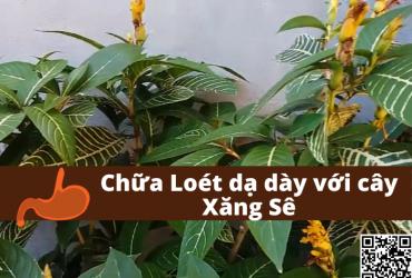 chua-dau-da-day-loet-da-day-voi-cay-xang-se-xuantoan.com